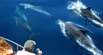 dolphin tours from Gibraltar algeciras